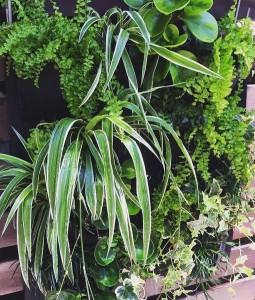 Green Wall Garden Design